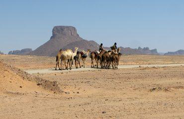 algeria-photo-grid-3